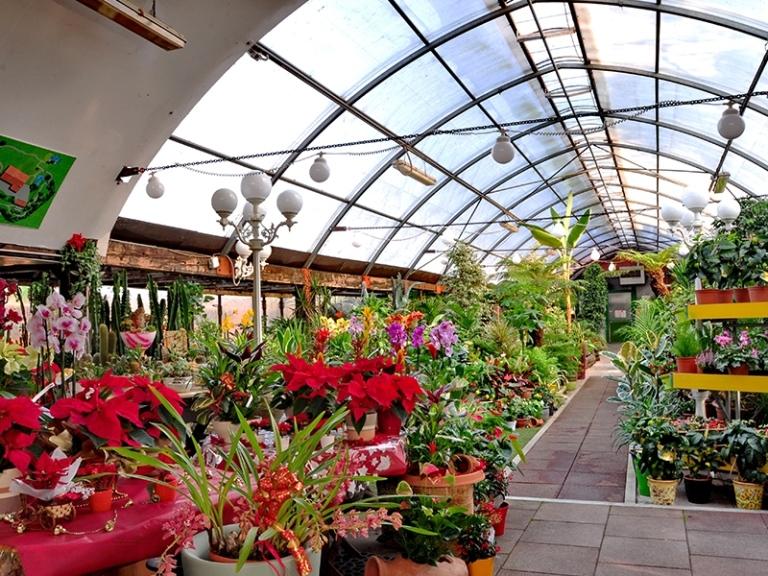 progettazione giardini ceretta torino vivai castagno